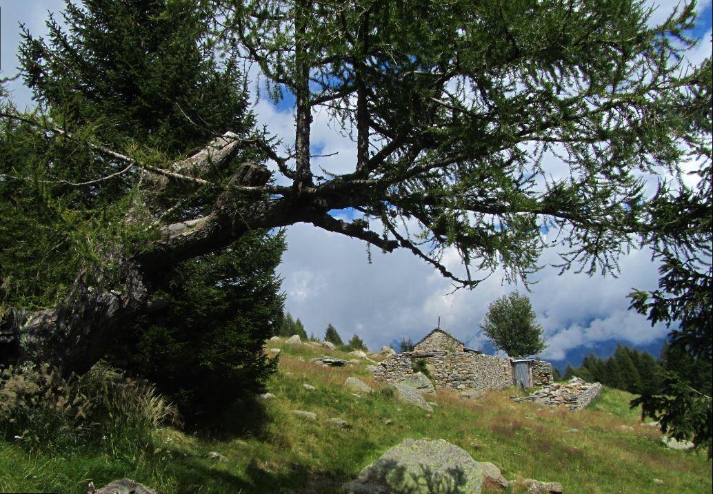 Alpe Arami